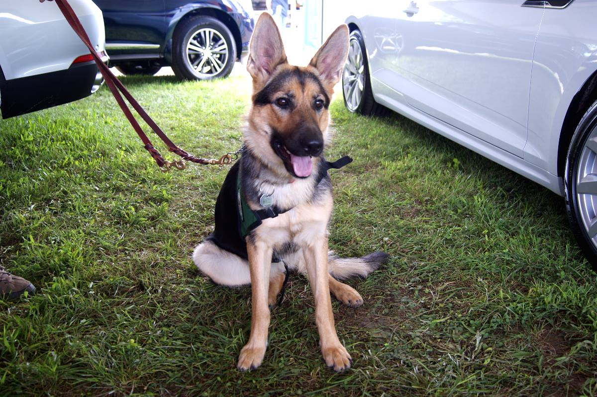 Dog at Fair